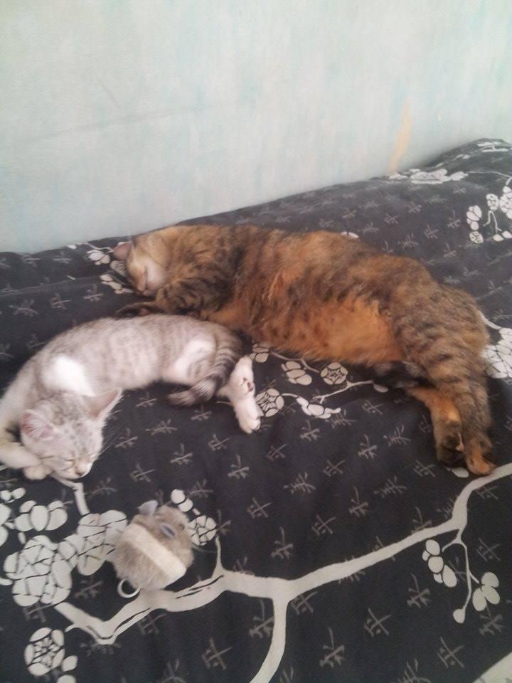 nouvelles de LOLITA chatte 10934210
