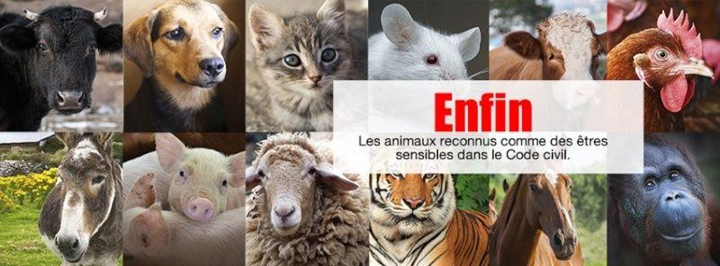 Révision du statut juridique des animaux ! 10958610