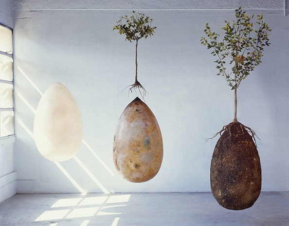 Les Cosses d'Inhumations Organiques (Organic Burial Pods) 1_biod13