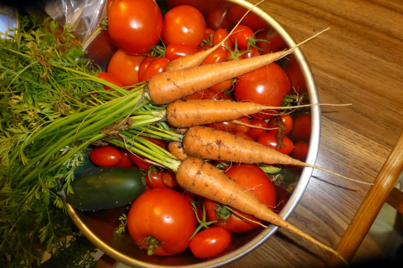 Carrot Week 2012! - Page 15 P1010710