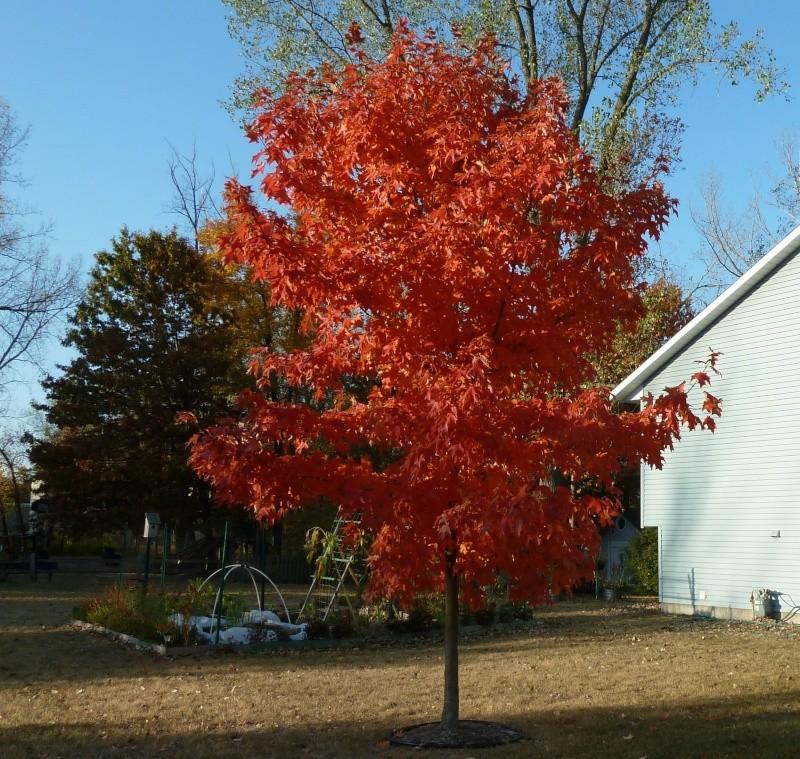 Monthly Avatar Theme, October: Fall! Treega10