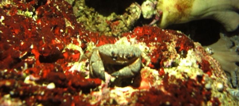 3 crabes ! Pas bon je pense ? Apict011
