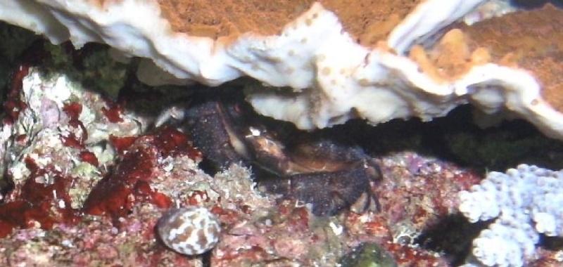 3 crabes ! Pas bon je pense ? Apict014