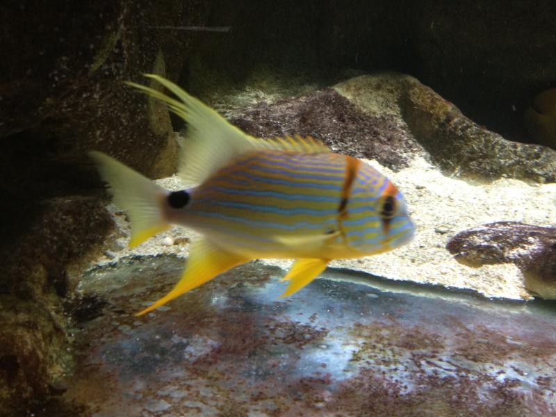 L'aquarium d'AMNEVILLE -57- visite prévue le 23/08/2012  Img_0710