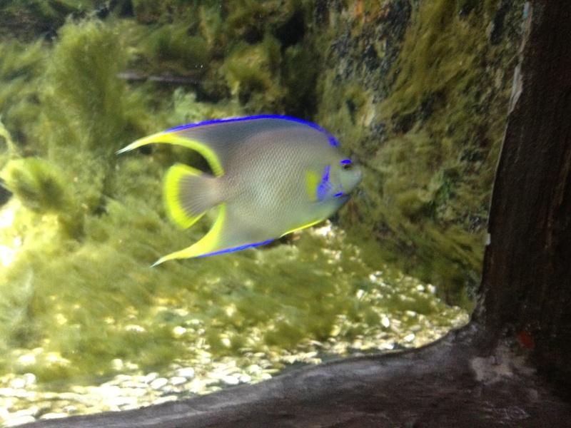 L'aquarium d'AMNEVILLE -57- visite prévue le 23/08/2012  Img_0711