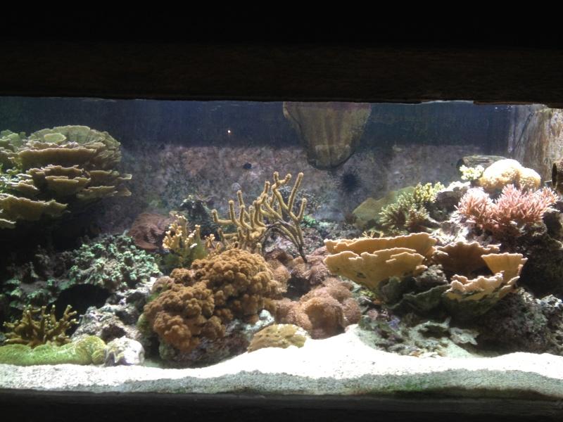 L'aquarium d'AMNEVILLE -57- visite prévue le 23/08/2012  Img_0712