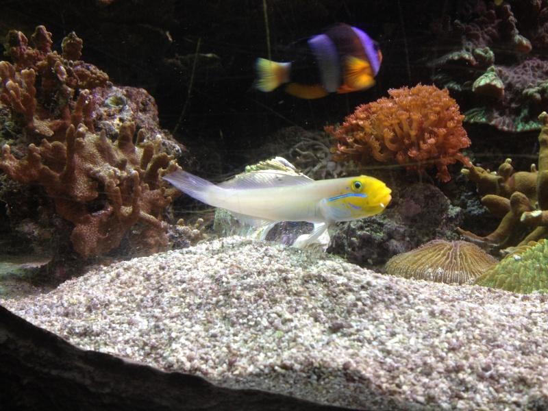 L'aquarium d'AMNEVILLE -57- visite prévue le 23/08/2012  Img_0713
