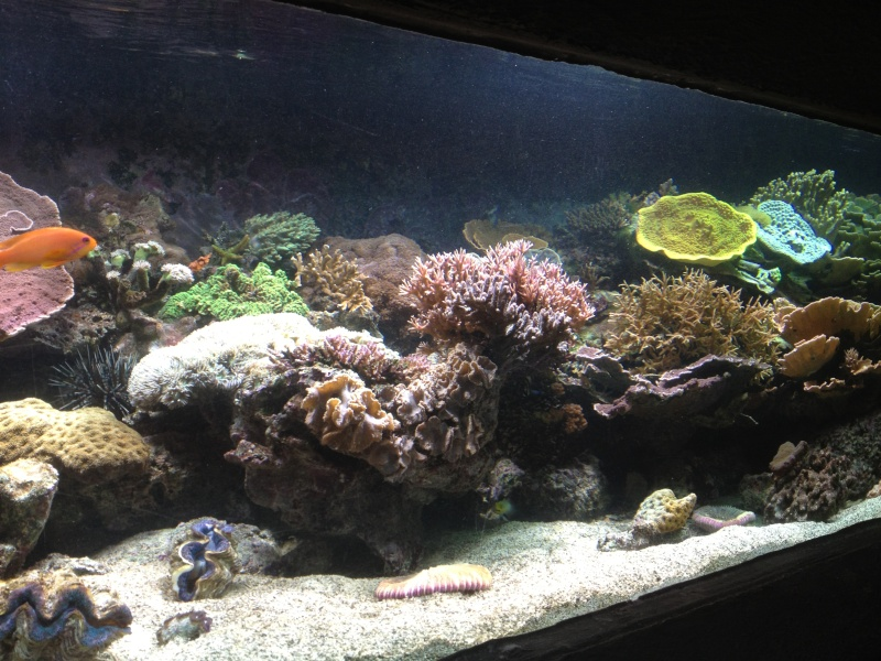 L'aquarium d'AMNEVILLE -57- visite prévue le 23/08/2012  Img_0714