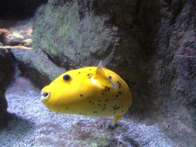 L'aquarium d'AMNEVILLE -57- visite prévue le 23/08/2012  Img_0715