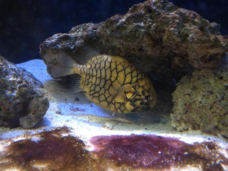 L'aquarium d'AMNEVILLE -57- visite prévue le 23/08/2012  Img_0718