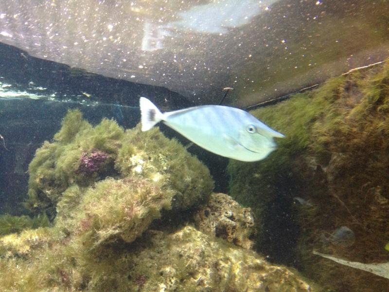 L'aquarium d'AMNEVILLE -57- visite prévue le 23/08/2012  Img_0723