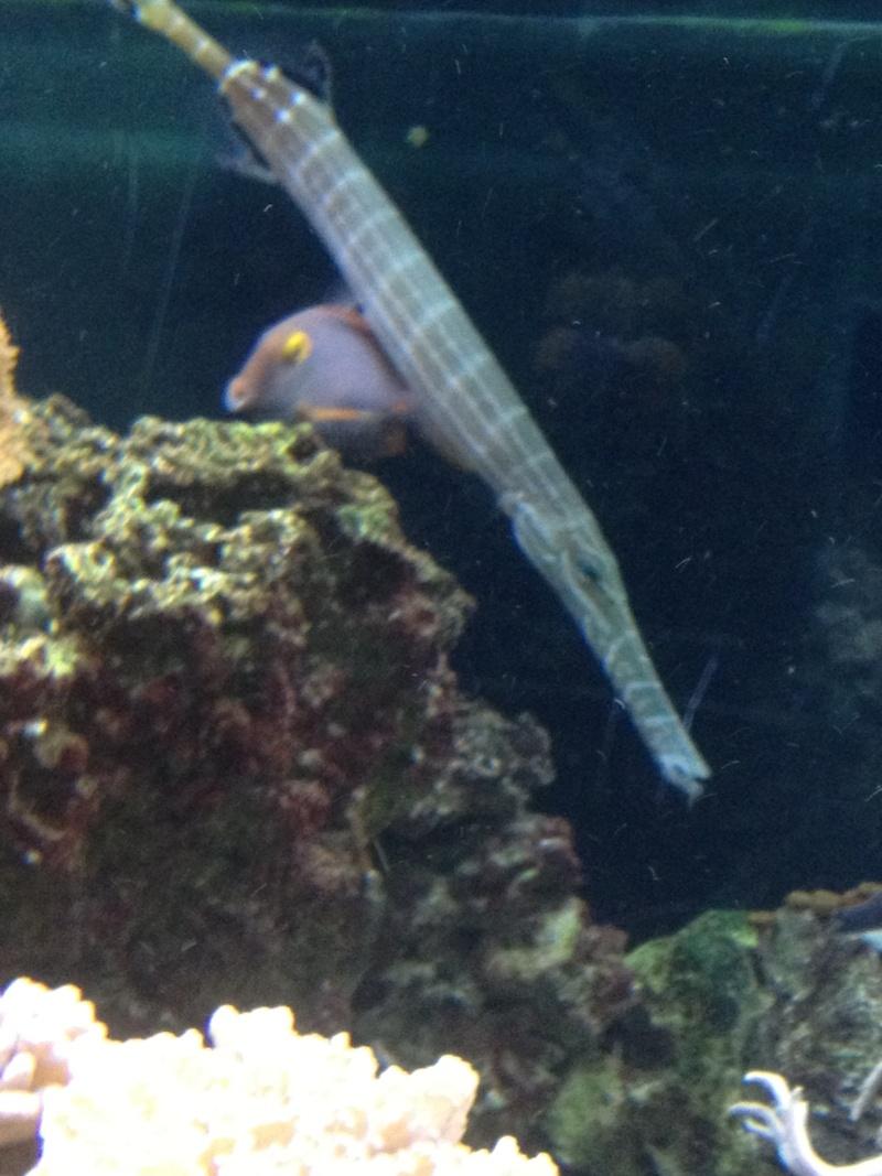 L'aquarium d'AMNEVILLE -57- visite prévue le 23/08/2012  Img_0726