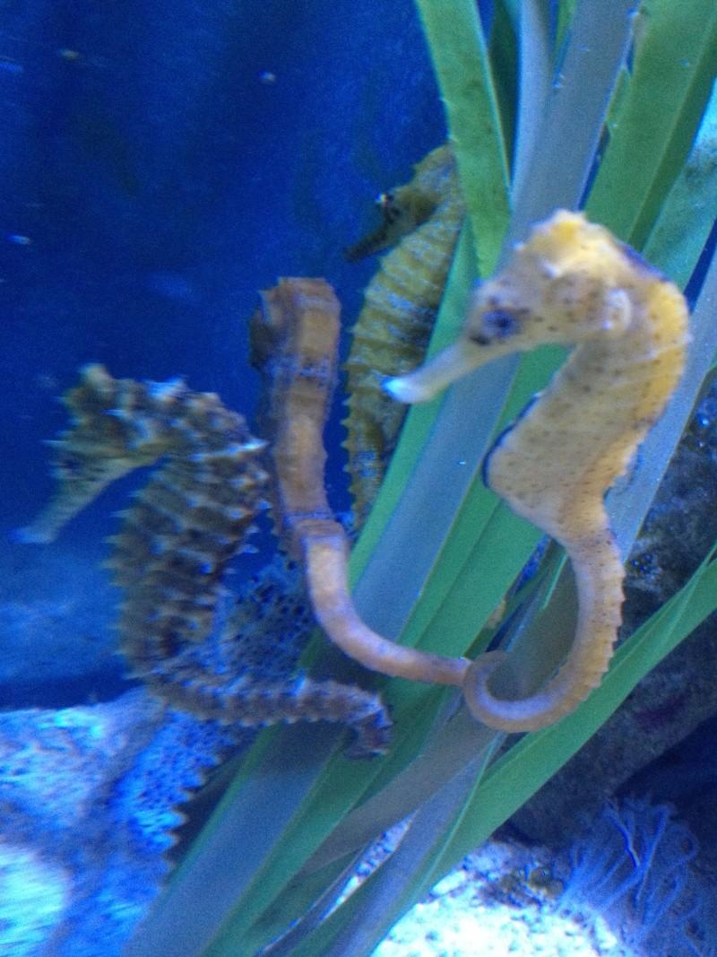 L'aquarium d'AMNEVILLE -57- visite prévue le 23/08/2012  Img_0812