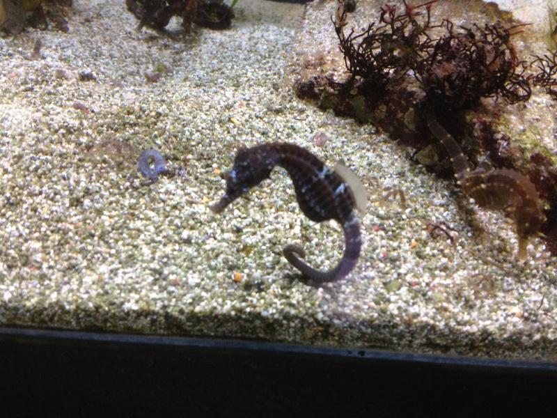 L'aquarium d'AMNEVILLE -57- visite prévue le 23/08/2012  Img_0814