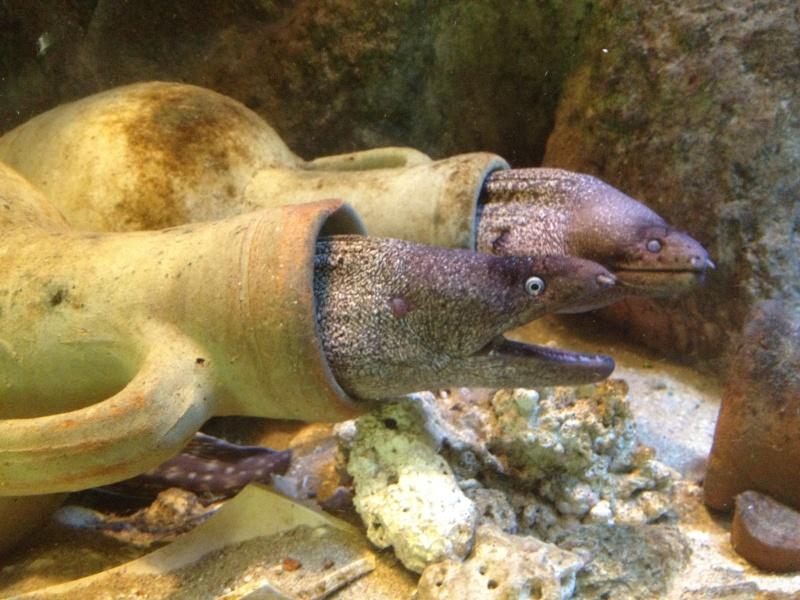 L'aquarium d'AMNEVILLE -57- visite prévue le 23/08/2012  Img_0815