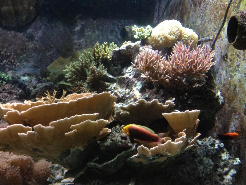 L'aquarium d'AMNEVILLE -57- visite prévue le 23/08/2012  Img_0816
