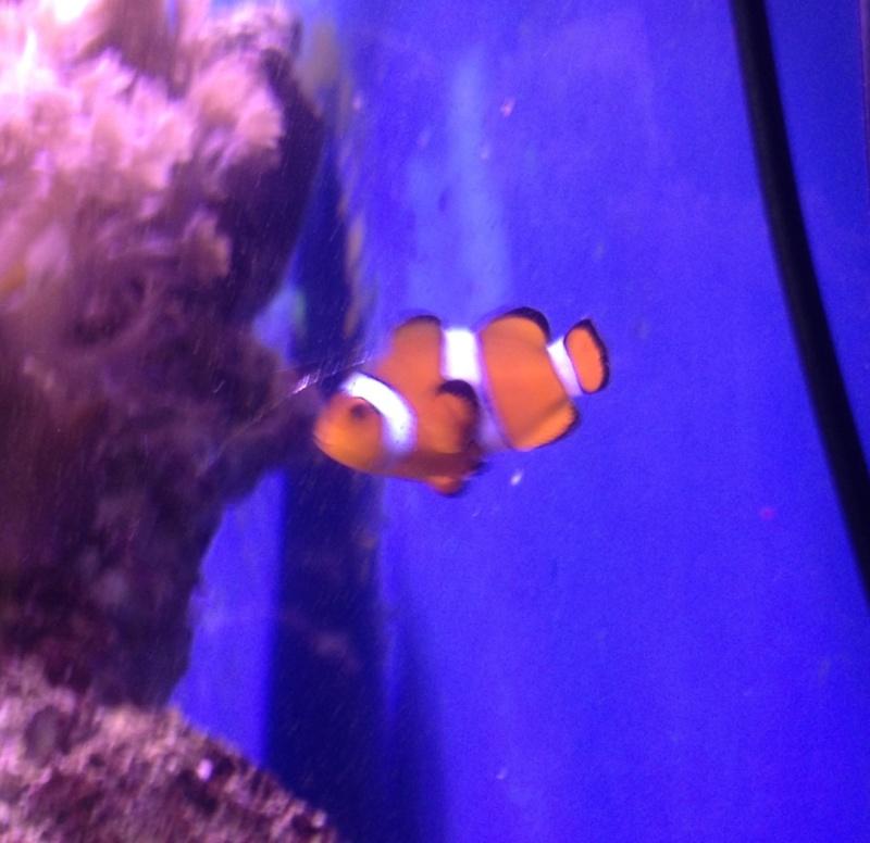"""Mon 400 litres. """"Gio-gio"""" Nemo10"""