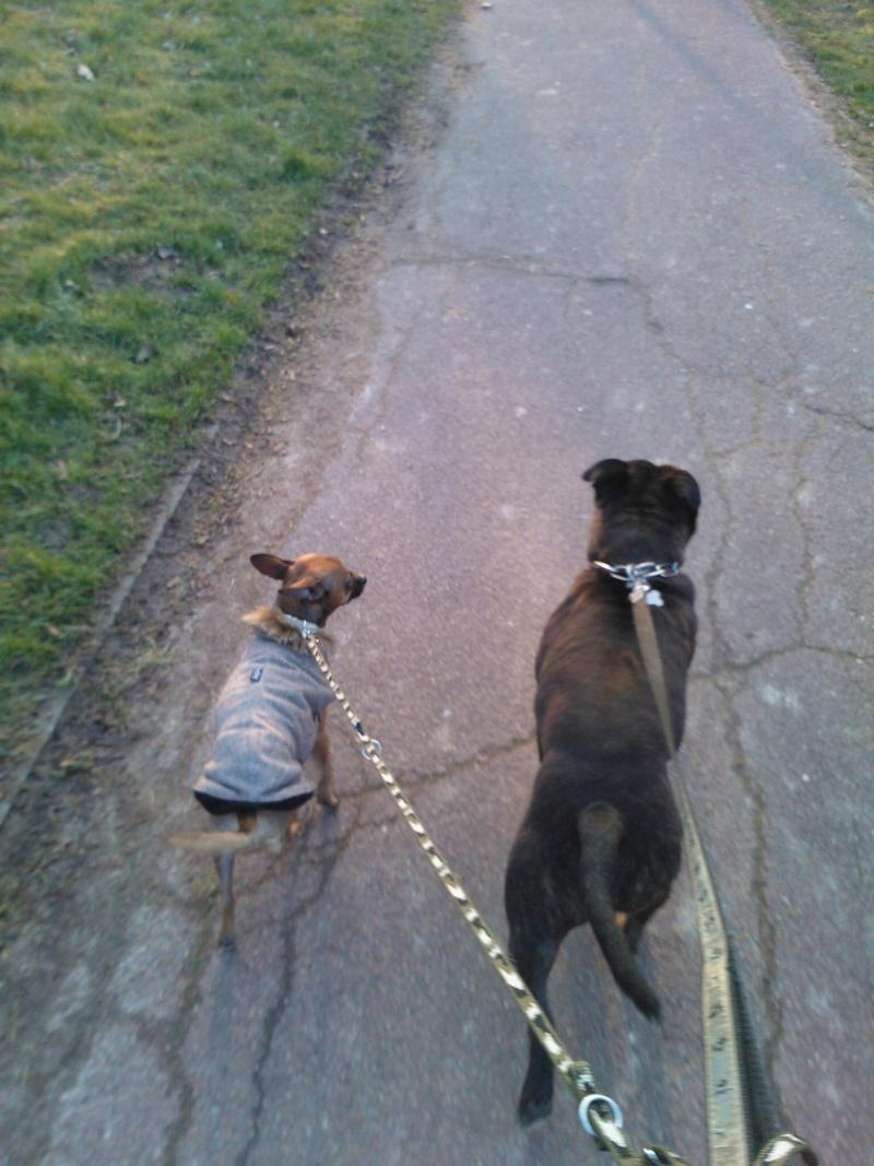 victoires - Nos petites et grandes victoires avec nos chiens - Page 40 Image114