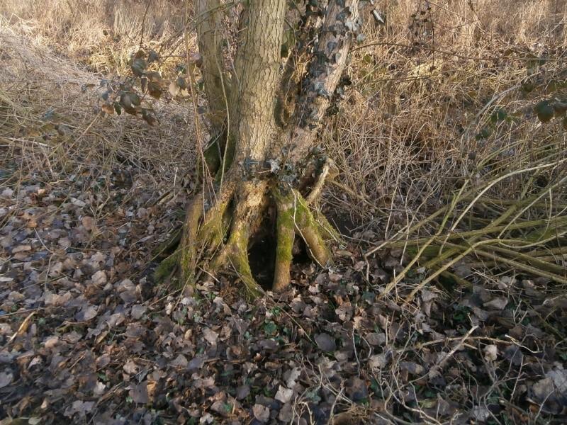 """"""" La galerie des arbres Creux """" P2190021"""