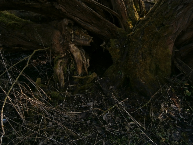 """"""" La galerie des arbres Creux """" P2190027"""