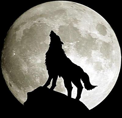 Forum du Clan White Wolf