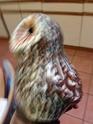 Briglin Owl or Rosemary Wren? Img_2014