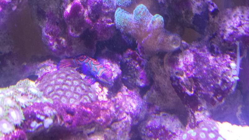 reef nano - Page 2 20150112