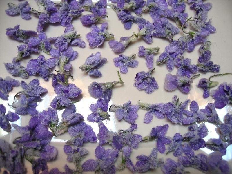 Probleme pour se connecter - Page 12 Fleurs10