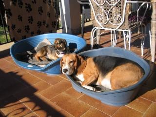 Besoin de votre aide pour Ioko, femelle beagle de deux ans Img_0016
