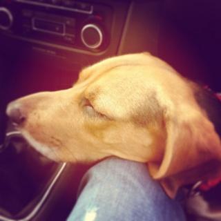 Besoin de votre aide pour Ioko, femelle beagle de deux ans - Page 2 Ioko210