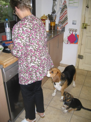 Besoin de votre aide pour Ioko, femelle beagle de deux ans Miam0012