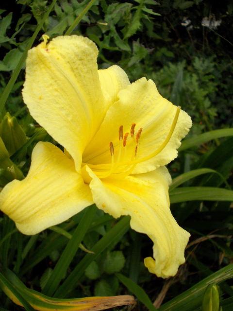 33 - Un nouveau thème.........alors jaune !!! - Page 4 Dscn8719