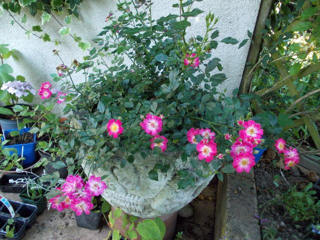 baby bloomer Dscn9426