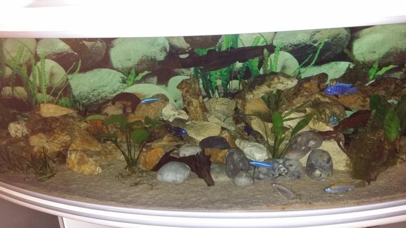 615 litres Malawi Mbunas -aquatlantis évasion horizon 20150211