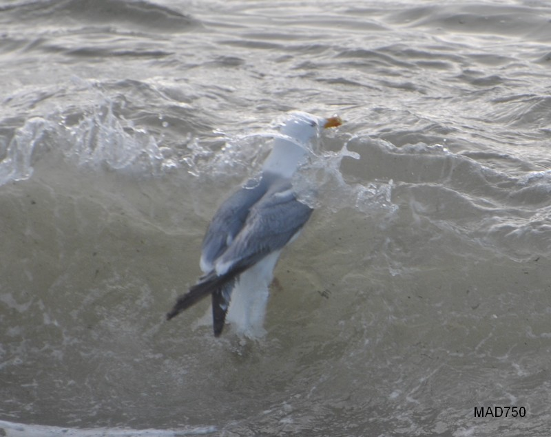 Surfeur Surfeu10