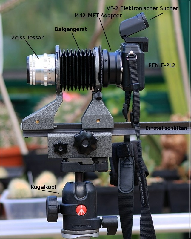 Makrofotografie mit dem Balgengerät Ff_img10