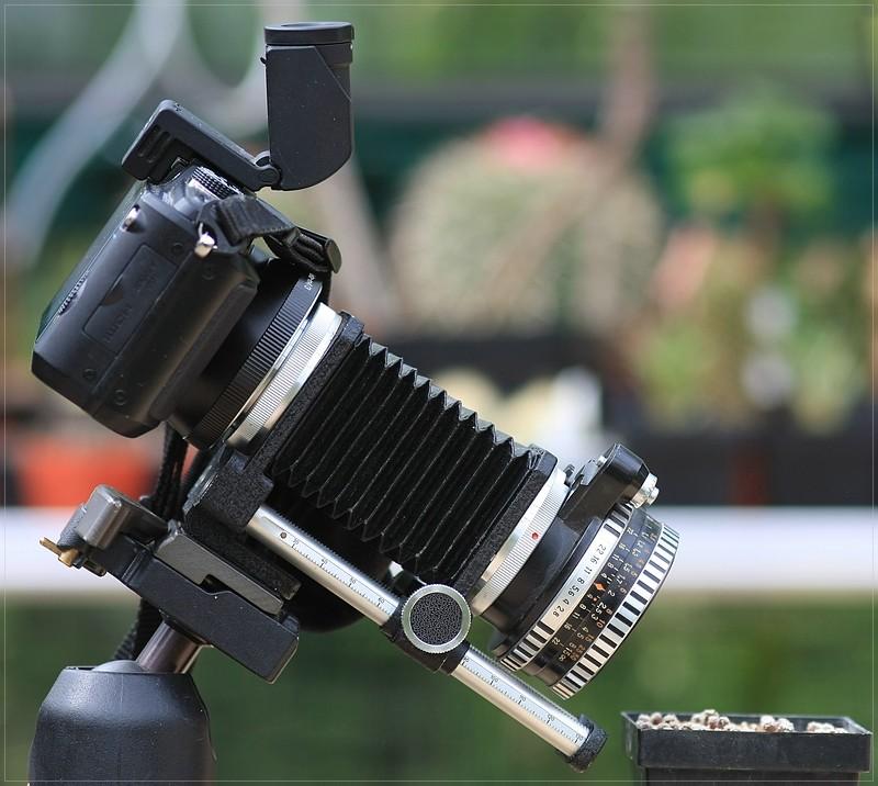 Makrofotografie mit dem Balgengerät Ff_tes10