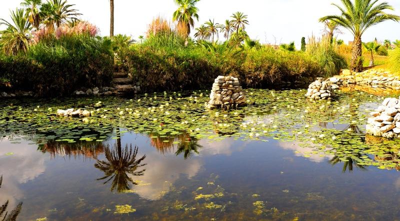 anax Pond10
