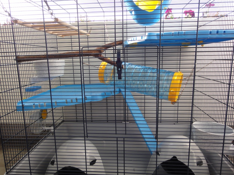RP(78) : etat neuf cage équivalent JENNY FERPLAST a vendre !! Dsc04111