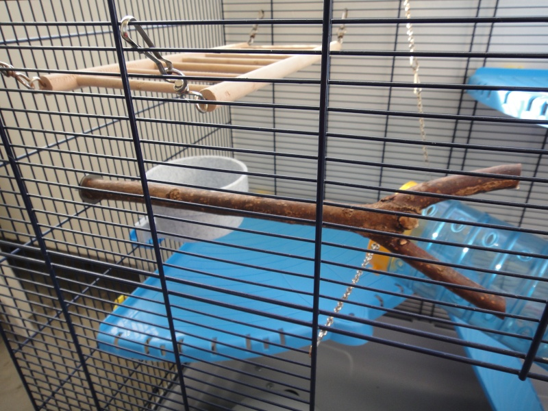 RP(78) : etat neuf cage équivalent JENNY FERPLAST a vendre !! Dsc04112