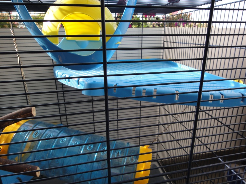 RP(78) : etat neuf cage équivalent JENNY FERPLAST a vendre !! Dsc04113