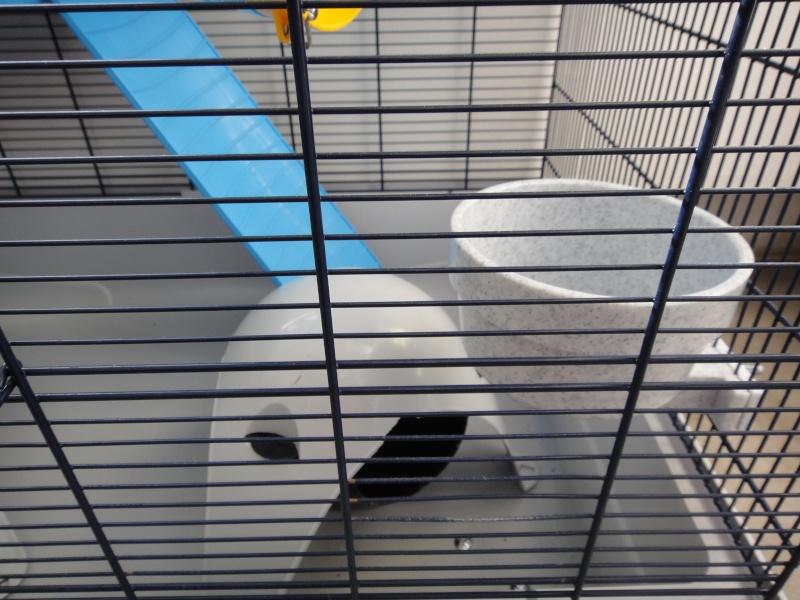 RP(78) : etat neuf cage équivalent JENNY FERPLAST a vendre !! Dsc04114