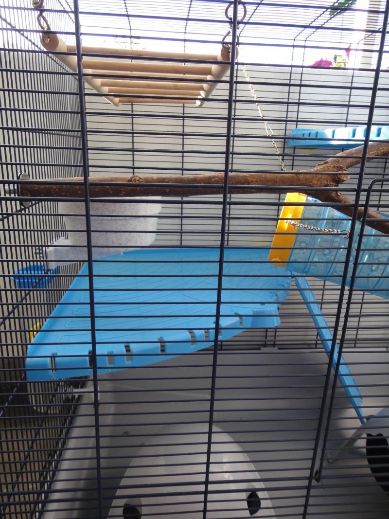 RP(78) : etat neuf cage équivalent JENNY FERPLAST a vendre !! Dsc04116
