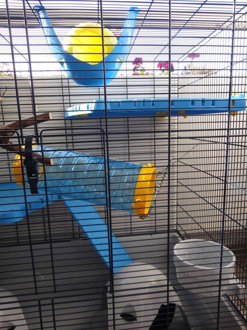 RP(78) : etat neuf cage équivalent JENNY FERPLAST a vendre !! Dsc04117