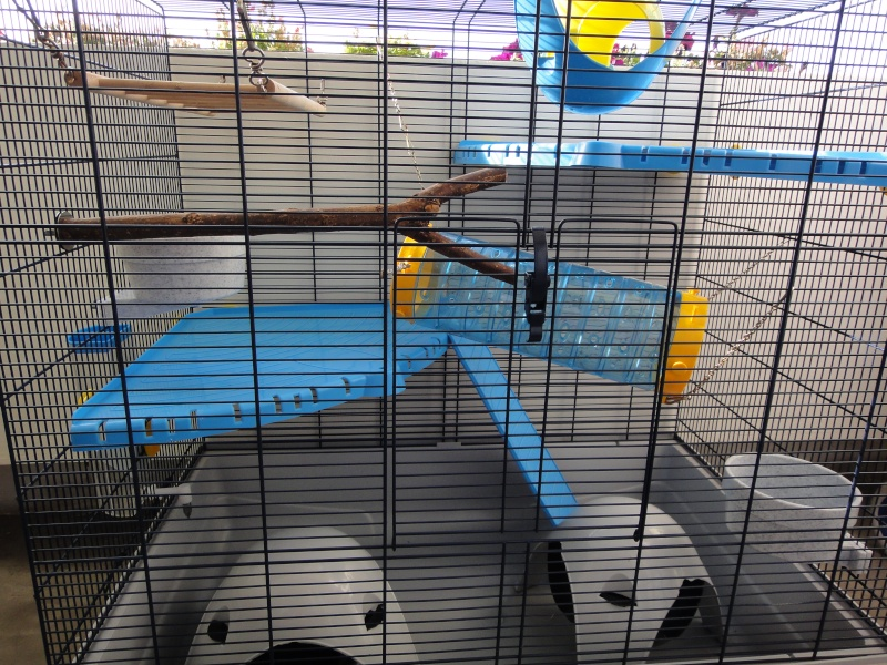 RP(78) : etat neuf cage équivalent JENNY FERPLAST a vendre !! Dsc04118