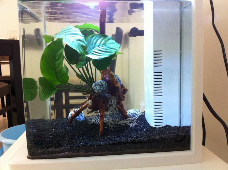 Notre Superfish Led 15L spé crevettes Img_5121