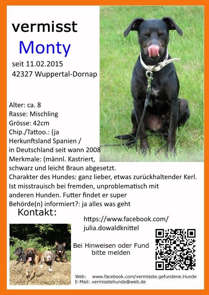 Hilfe Monty - Entlaufen in Wuppertal 10405410