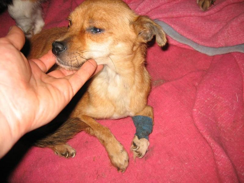 TINA, F mini x chihuahua née env 2012 (Anda) - Réservée adoption par la maman d'Astrid (dpt 67) - Page 3 Tina_210