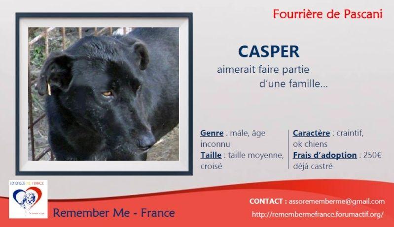 CASPER - Mâle croisé de taille moyenne, né environ octobre 2009 (PASCANI) - adopté par Marie-Blanche (57) Visuel14