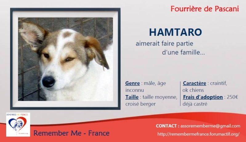 HAMTARO - + 4 ANS DE BOX!!! - mâle croisé de taille moyenne, né env 2012 (PASCANI) - REMEMBER ME LAND - adopté par Aurore (Belgique) - DECEDE Visuel27